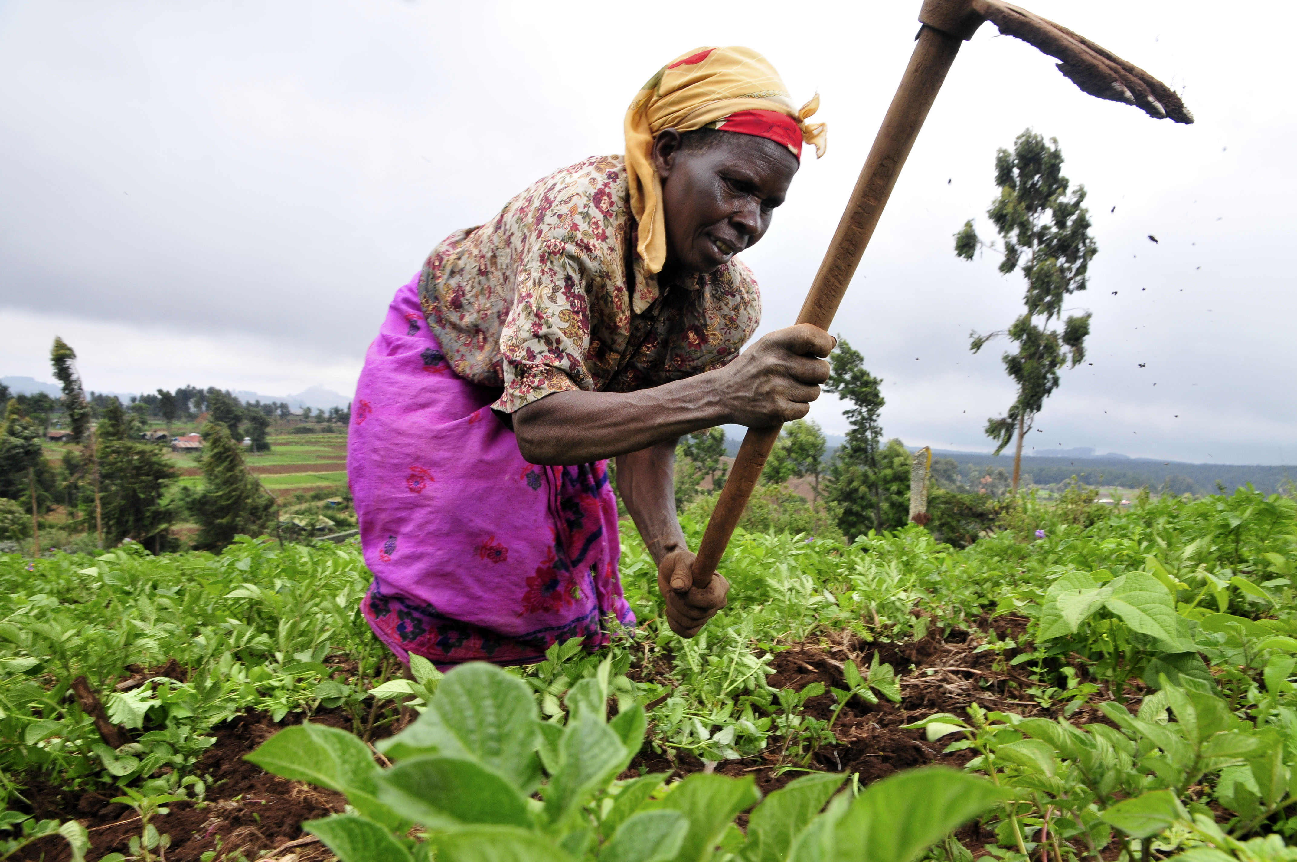 Gender and food security are key climate issues in Africa