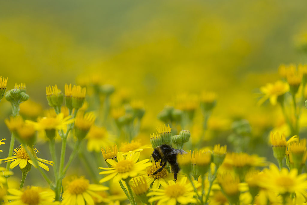 Conservative MEP looks to derail bee harming pesticide ban