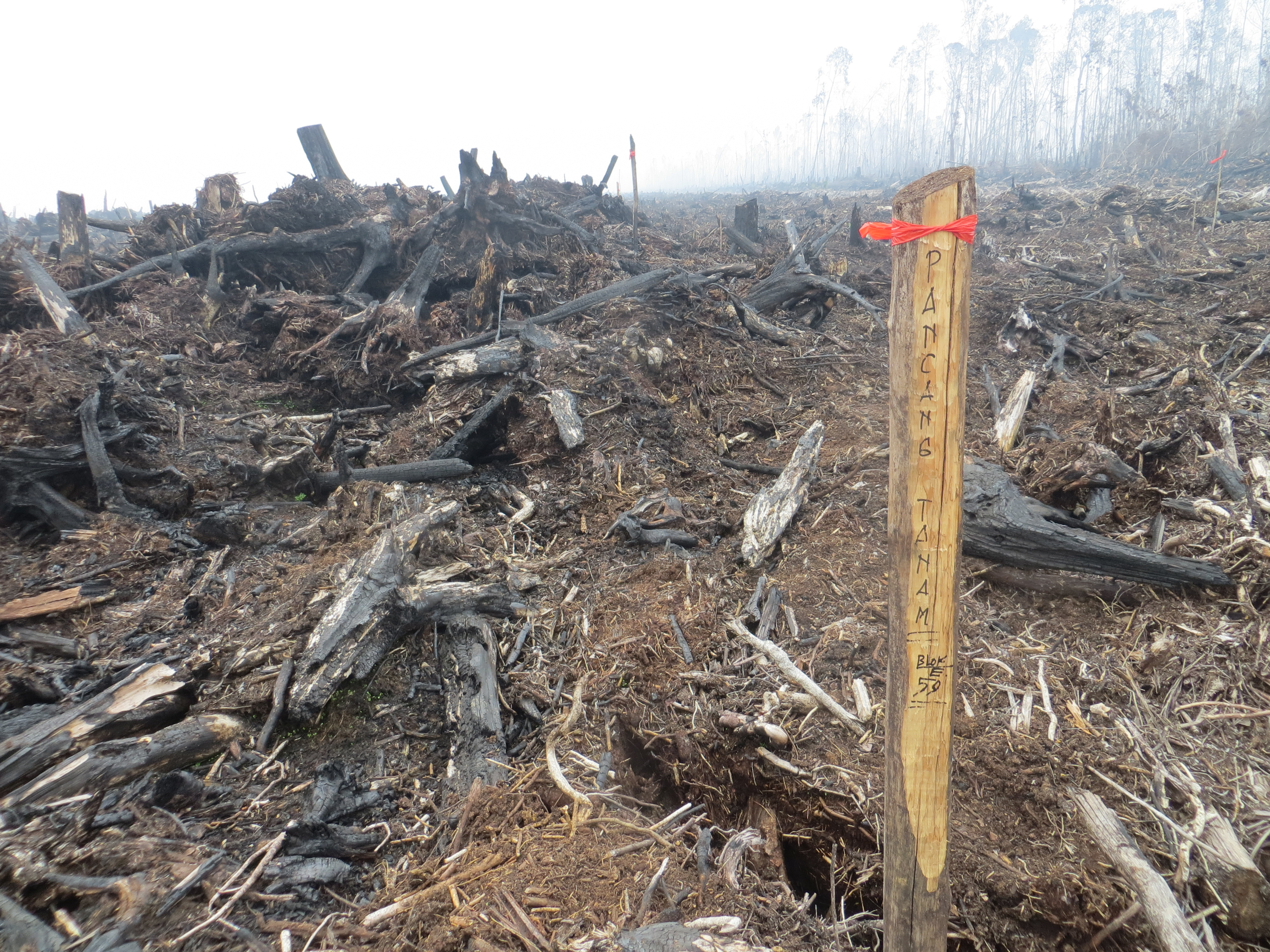 Sign marked 'pancang tanam' – sapling planting – in a recently burnt area of deep peatland in PT KAS